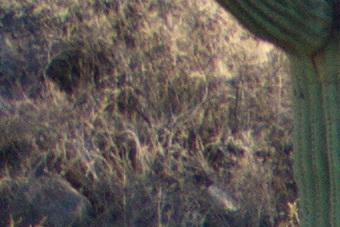 Late2012/55300corn56m.jpg
